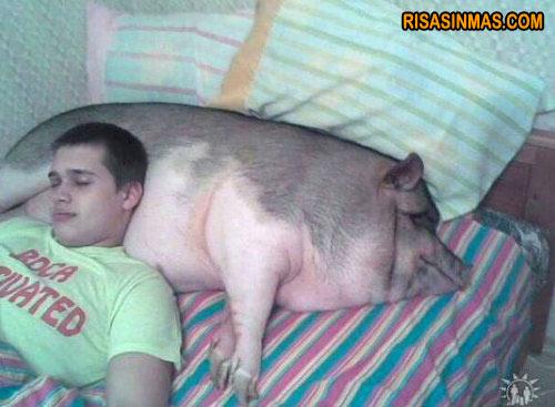 Almohada cerdo
