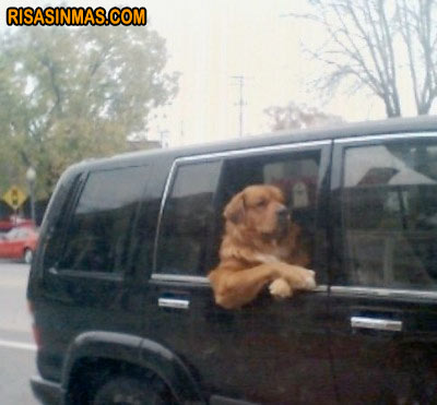 Perro disfrutando del viaje