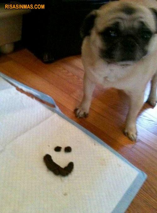 Tu perro te ha dejado un mensaje