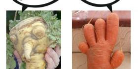 Discusión entre verduras