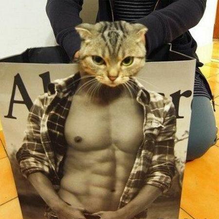 Gatito musculoso