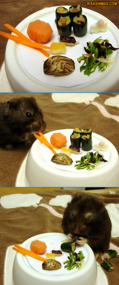 Menú Sushi para Hamsters