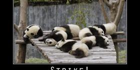 Strike! Pandas