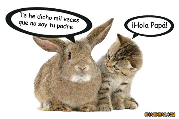 Animaladas: Conversación entre un gato y un conejo