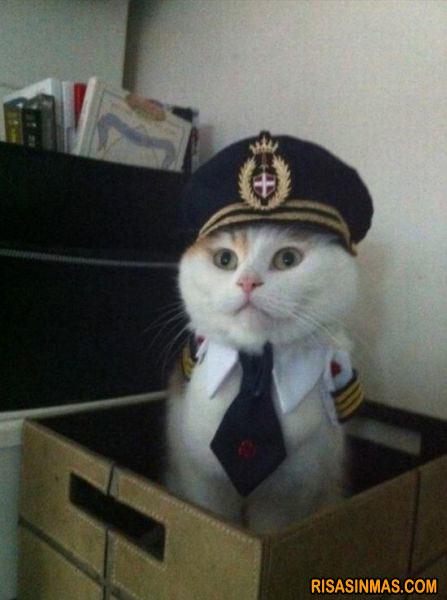 Capitán gato