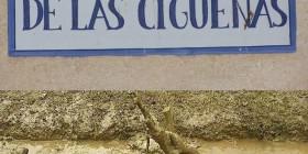Cuidado con los excrementos de las cigüeñas