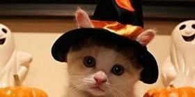 Disfraces Gatunos: Bruja de Halloween