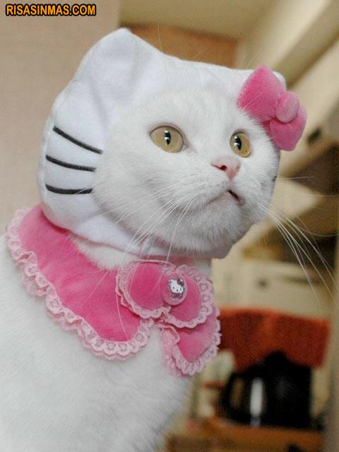Disfraces Gatunos: Hello Kitty