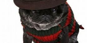 Disfraces perrunos: Freddy Krueger