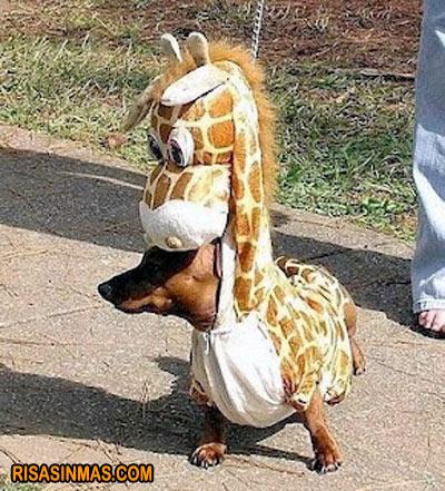 Disfraces perrunos: perro jirafa
