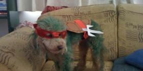 Disfraces perrunos: Tortuga Ninja