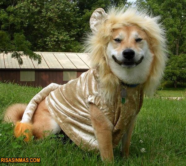Disfraces perrunos: perro-león