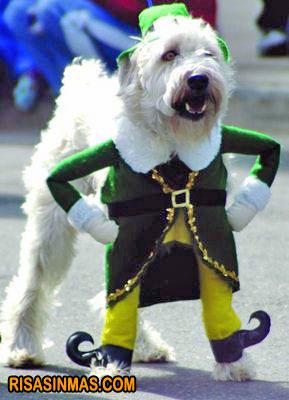 Disfraces perrunos: perro leprechaun