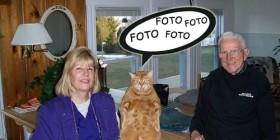 Gato posando para la foto