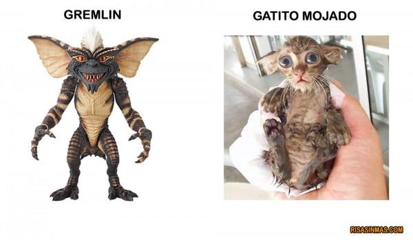Parecidos razonables: Gremlin y Gatito mojado