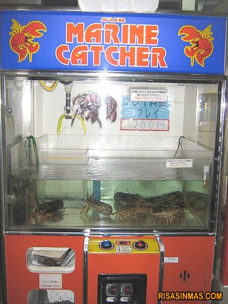 Máquina expendedora de Langostas