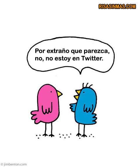 Pájaros hablando de Twitter