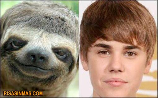 Parecidos razonables: Oso perezoso y Justin Bieber