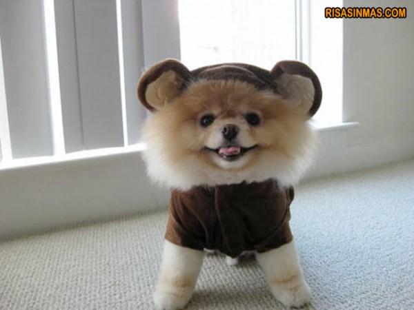 Disfraces perrunos: Perro mono