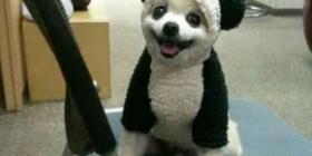 Disfraces perrunos: Perro panda