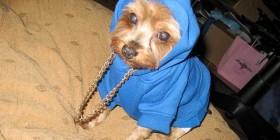 Disfraces perrunos: Perro rapero
