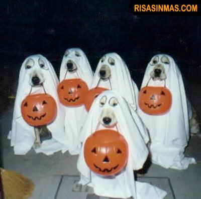 Disfraces perrunos: Halloween