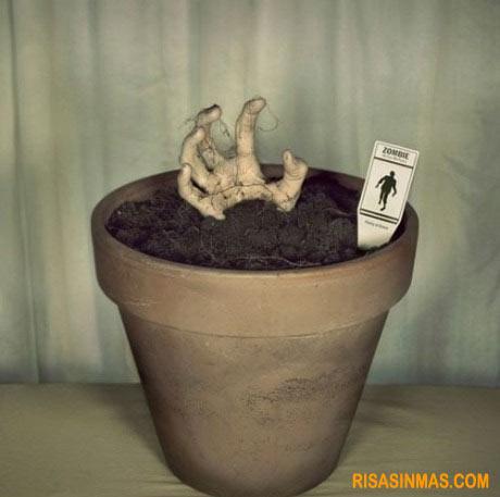 Planta tu propio zombie
