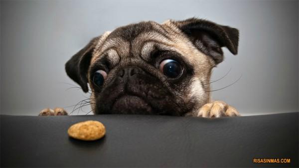 Quiero mi galleta