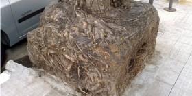 ¿Alguien sabe lo que es una raíz cuadrada?