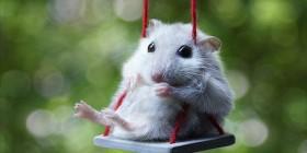 Ratón estresado