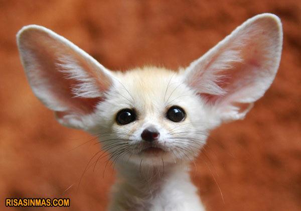 Soy todo oídos...
