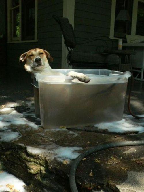 El perro más feliz del mundo