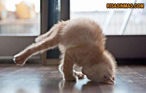 Yoga gatuno