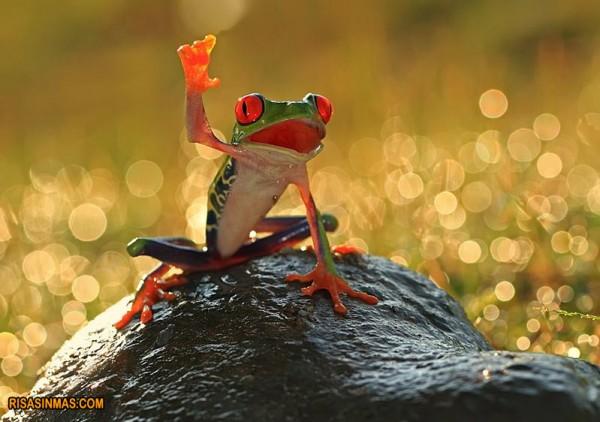Petición de la rana