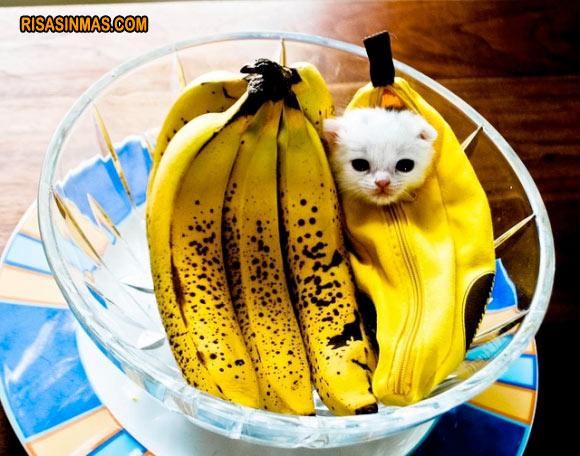 Disfraces gatunos: de plátano