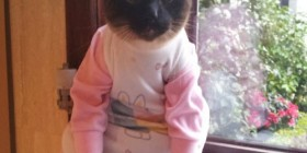 Disfraces gatunos: de bebé
