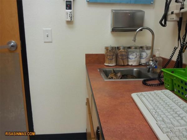 Pasatiempo del día: encuentra el gato