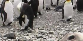 Fotobomba de la foca