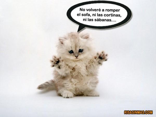 Gatito confesando