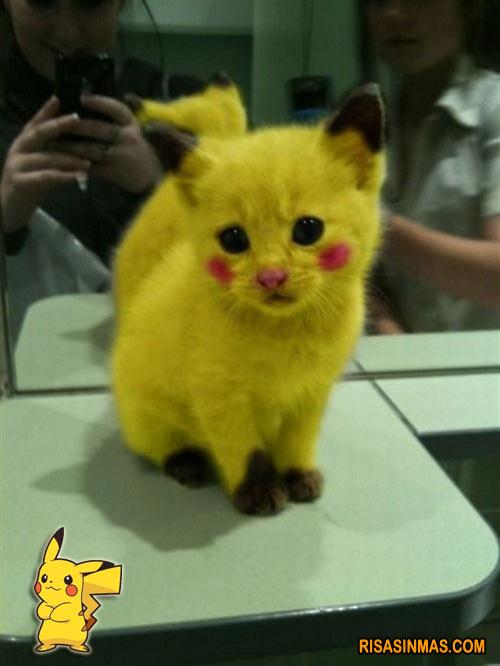 Disfraces Gatunos: Pikachu