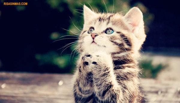 Gatito rezando