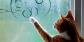 Gato artístico