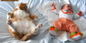 Gato imitador