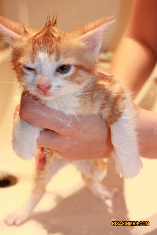 ¡Al agua gato!