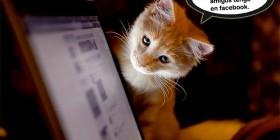 Gatito consultando su Facebook