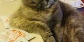 Gato sentado cómodamente