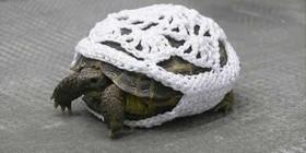 La tortuga de mi abuela