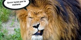 León de lunes