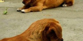 Pelea entre un perro y una mantis religiosa.