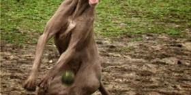 Perro buscando la pelota